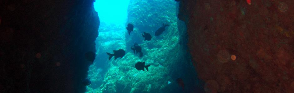 Padi Dive Centre in Mauritius