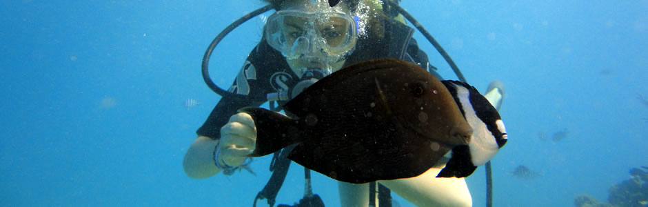 Professional Scuba Diving in Mauritius