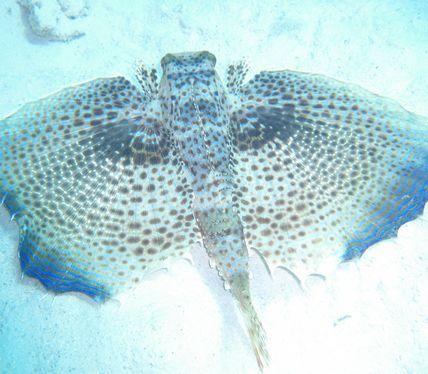 Scuba Diving Courses Mauritius