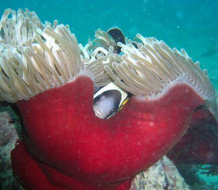 PADI Dive Centre Mauritius
