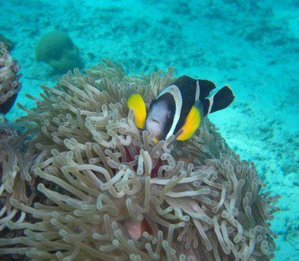 PADI Scuba Diving Centre Mauritius